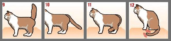 Фото №3 - Как понять кошку по хвосту
