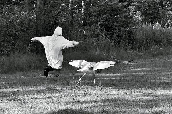 Фото №3 - Злые птички