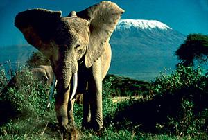 Фото №6 - Верные многоженцы: масаи