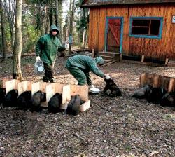 Фото №4 - Хозяин тверского леса