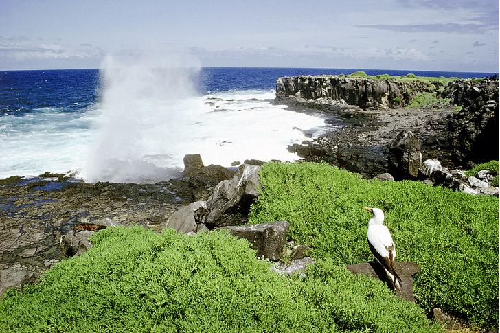 Фото №3 - Зоология: островитяне
