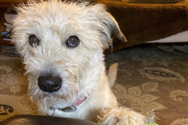 Фото №1 - До слез: пес погиб, спасая хозяина из пожара
