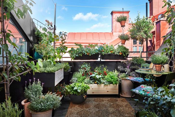 Фото №13 - Календарь садовода: что и когда сажать дома и на даче