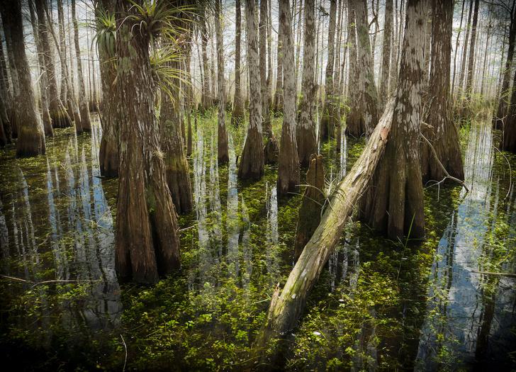 Фото №2 - Притягательная трясина: 12 самых живописных болот мира
