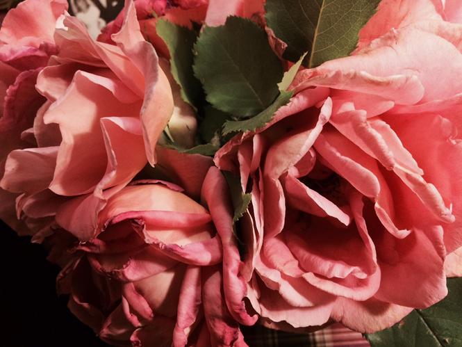 Фото №7 - Розы из сада д'Орнано: аромат Izia от Sisley