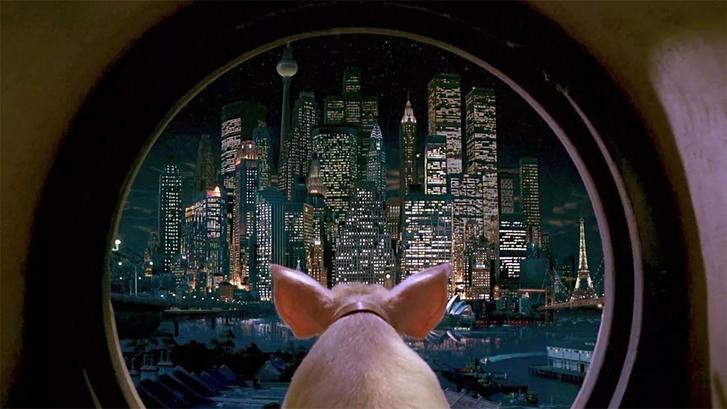 Фото №1 - Борцы за права животных требуют перестать ругаться словами «свинья», «змеюка» и т.д. У MAXIM есть много отличных идей