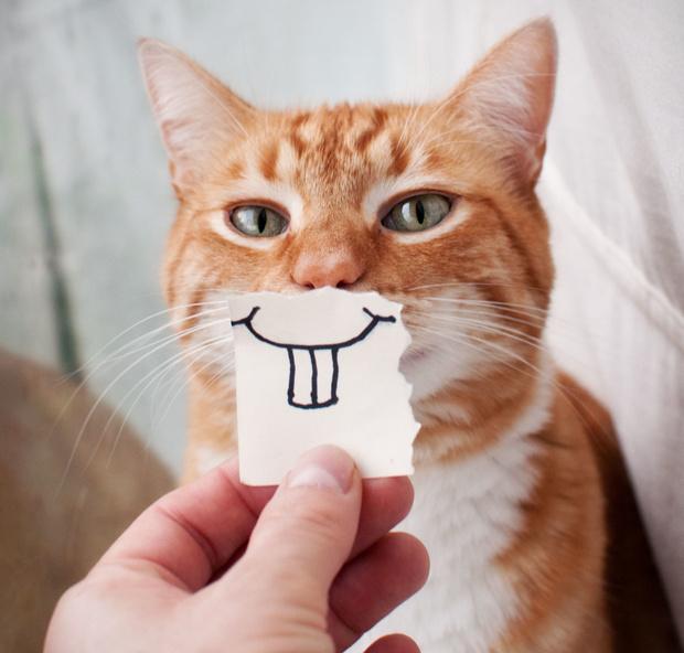 Фото №1 - Зоологи обнаружили, как кошки улыбаются