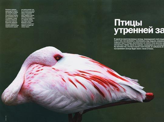 Фото №1 - Птицы утренней зари