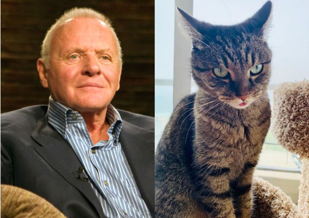 Энтони Хопкинс и его кот