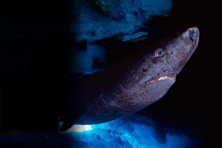 Фото №6 - 11 самых старых существ на Земле