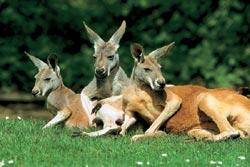 Фото №5 - Австралийские пустынники