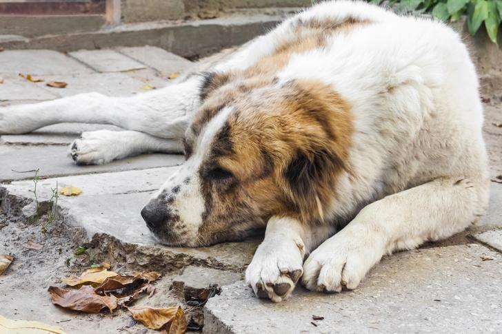 Фото №6 - Топ-15 самых популярных в России пород собак