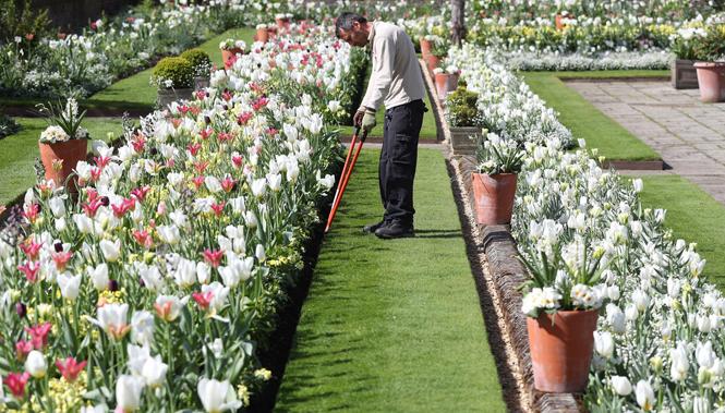 Фото №4 - Сад памяти Дианы: самая вдохновляющая причина попасть в Лондон