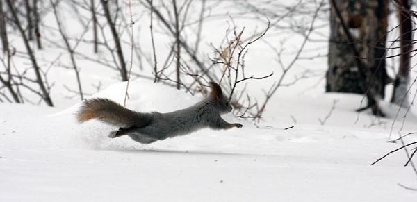 Фото №5 - К Новому году сама природа замирает