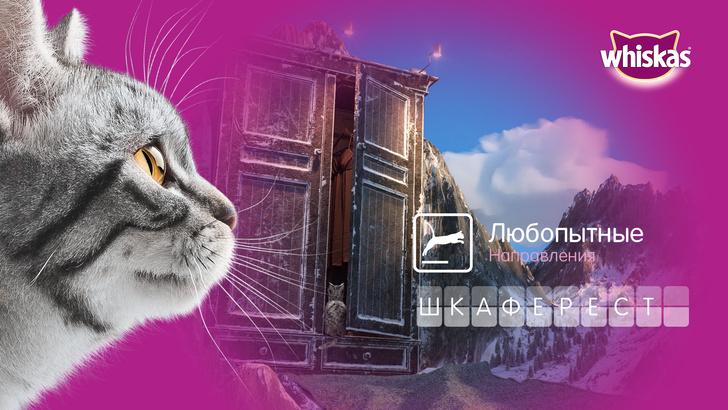 Фото №1 - Не дом, а целый мир — взгляните на квартиру глазами вашей кошки