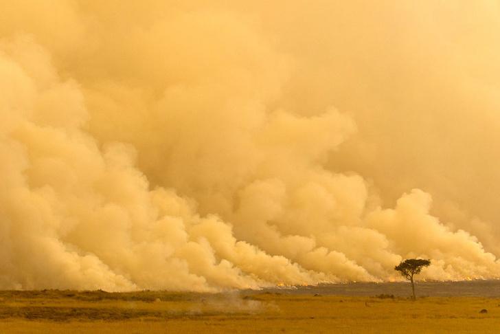 Фото №1 - В Африке участились песчаные бури