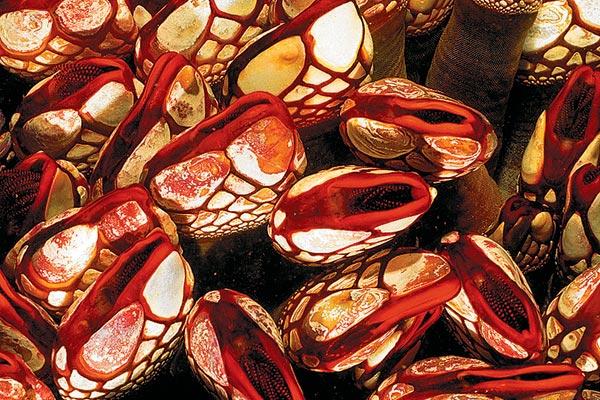 Фото №1 - Бронированные деликатесы
