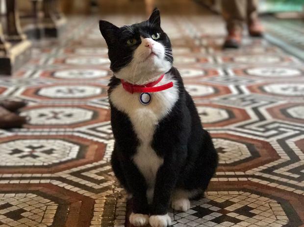 Фото №1 - Коты на службе Ее Величества