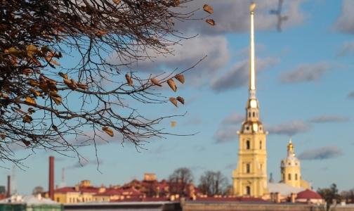 Фото №1 - В октябре вместе с рождаемостью в Петербурге выросла смертность