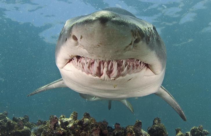 Фото №1 - Ученые опознали нападавшую акулу по ДНК
