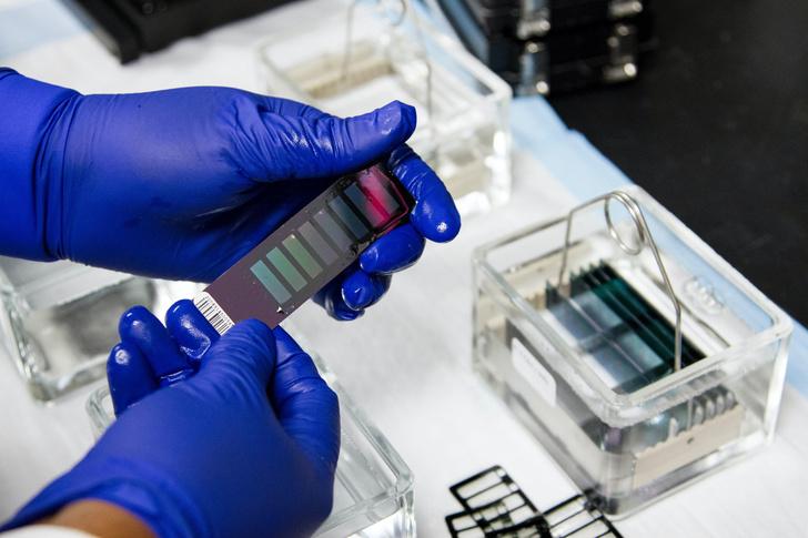 ученые создали тест-полоски, которые определяют вирус за 15 минут