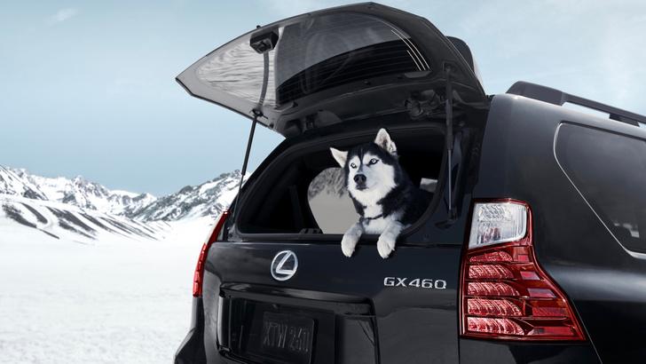 Фото №5 - Лучше новых двух. Lexus GX460 как воплощение идеального олдскула