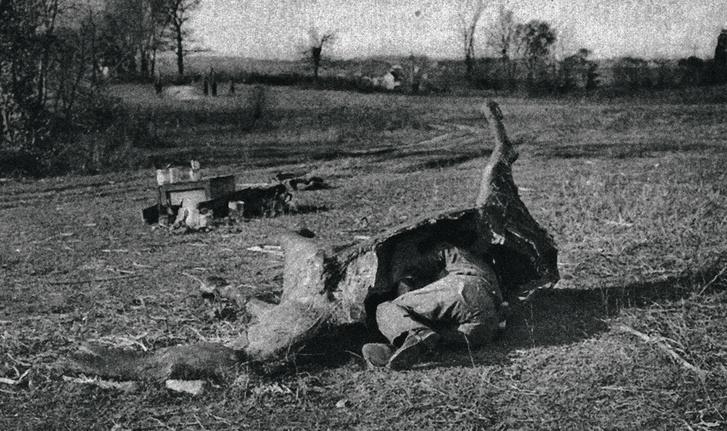 Труп лошади изпапье-маше, Первая мировая война