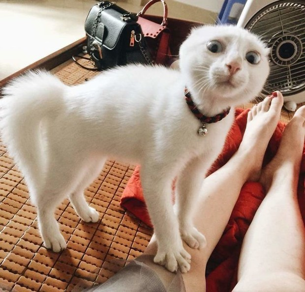 Фото №1 - Короли драмы: 25 невероятно артистичных котиков