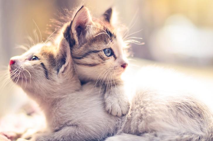 Фото №9 - 10 причин, почему у вас дома должен жить кот