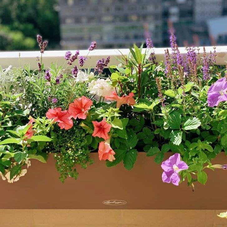 Фото №2 - Зеленый оазис на балконе: 5 растений, которые помогут перенести жару