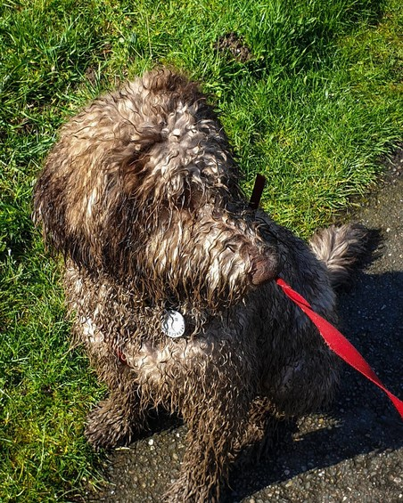 Фото №23 - Если собака без поводка: 15 фото песиков до и после прогулки