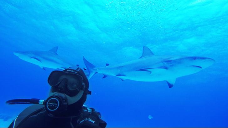 Фото №3 - Челюсти в фокусе: 5 нападений акул, которые потрясли мир