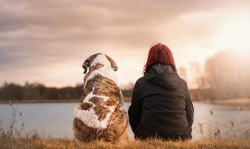 Фото №1 - Роспотребнадзор напомнил об опасном заболевании, передающемся от собак