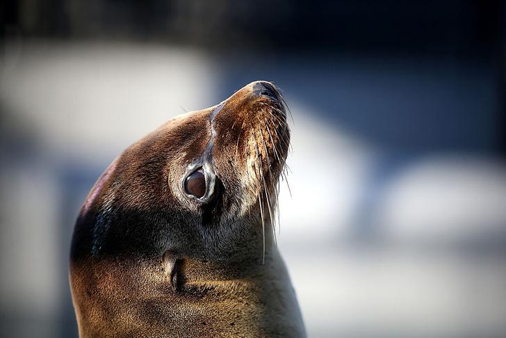 Фото №4 - «Дикие» герои: 5 невероятных историй спасения людей животными