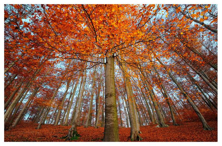 """Фото №5 - ВОКРУГ СВЕТА - партнёр выставки """"Лесные истории. Осень"""""""