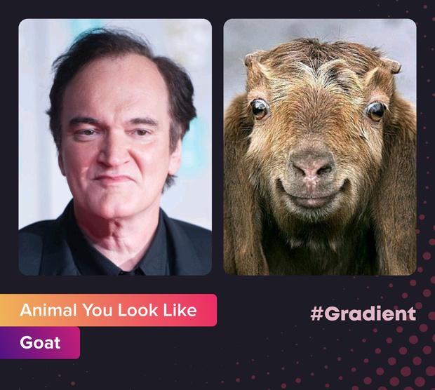 Фото №7 - На какое животное ты похож: новое развлечение от приложения Gradient