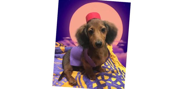 Фото №15 - 20 очаровательных собак в костюмчиках по мотивам мультфильмов Disney