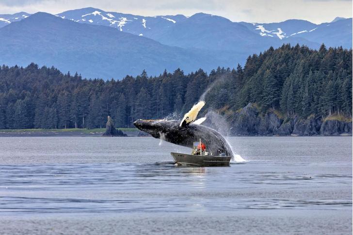 Фото №1 - Встреча с китом