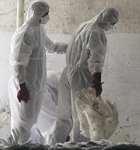 Фото №1 - Вирус H5N1 приобрел устойчивость к лекарствам