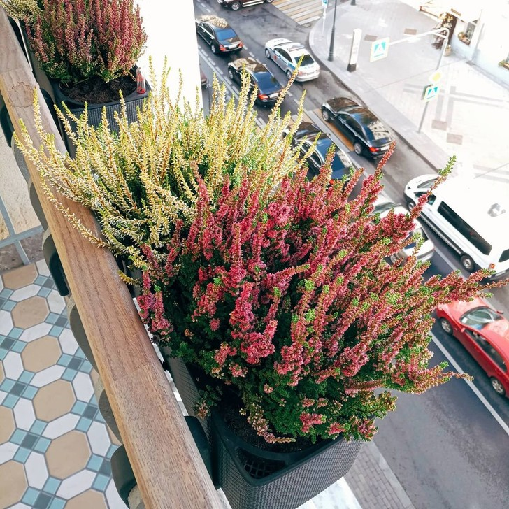 Фото №7 - Зеленый оазис на балконе: 5 растений, которые помогут перенести жару
