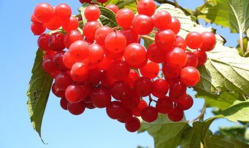 Фото №1 - Осенний витаминопад