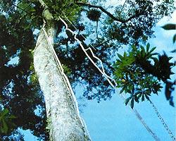 Фото №3 - Веревка смерти
