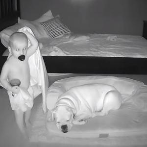 Фото №3 - Что будет, если оставить собаку в детской на ночь: видео