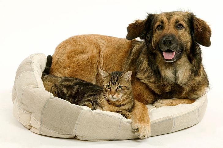 Фото №1 - Как кошки и собаки уживаются друг с другом