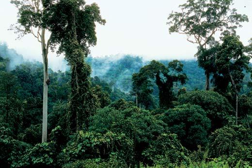 Фото №16 - Борнео, колыбель эволюции