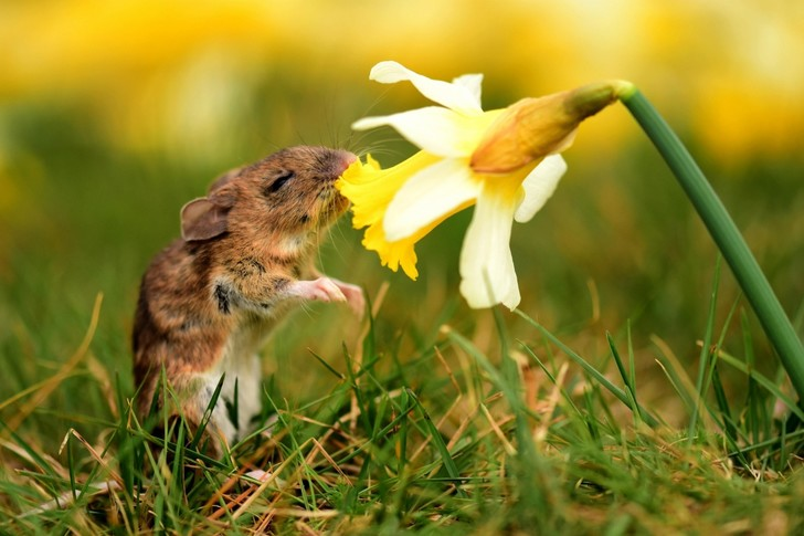 Фото №1 - Радость весне