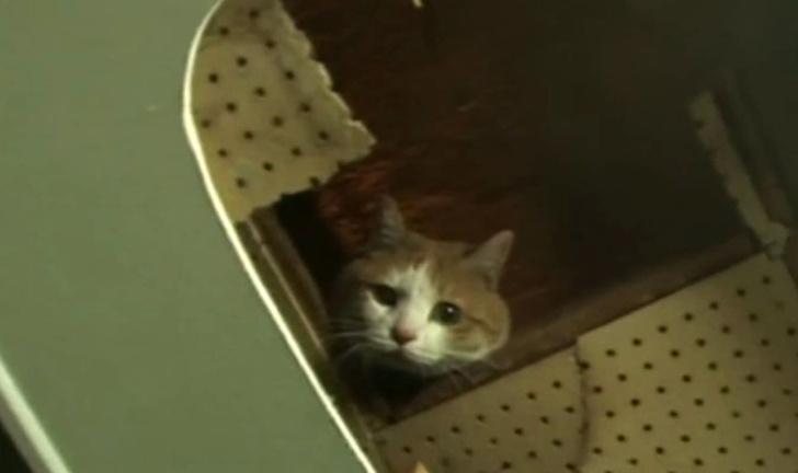 Фото №1 - В Корее спасли кошку, два года просидевшую в стене торгового центра (видео спасения)