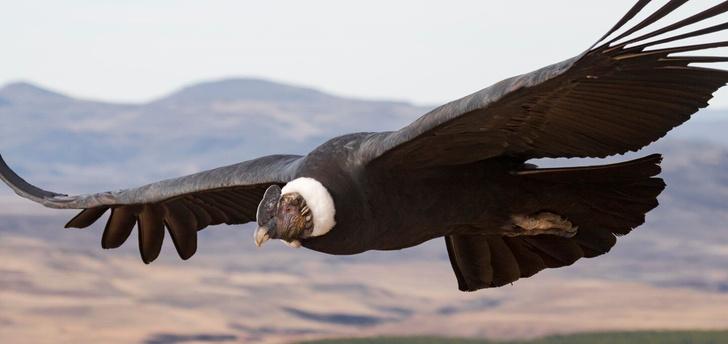 Фото №1 - Названа птица, способная пролететь 172 км без взмаха крыльев