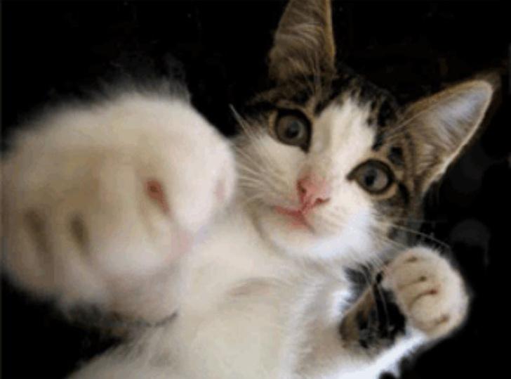 Фото №21 - 20 мемных котов, похожих на известных режиссеров