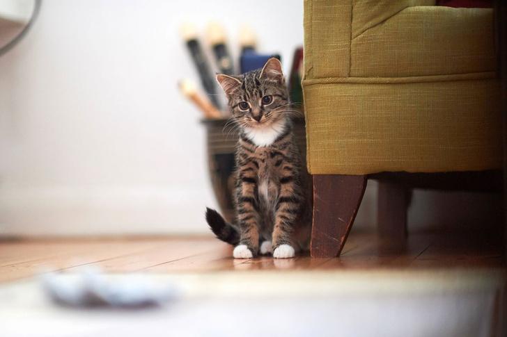 Фото №1 - Могут ли коты распознавать свое имя